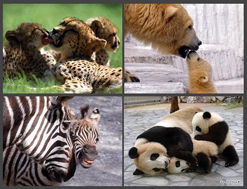Zoo02sample500